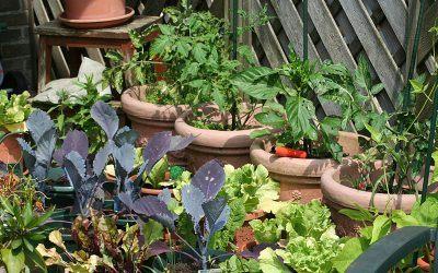 Vasos para hortas em apartamento